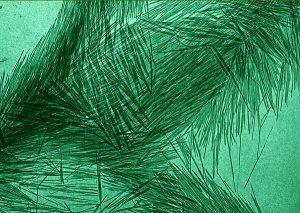 Cellulose vue au miscroscope XXXX